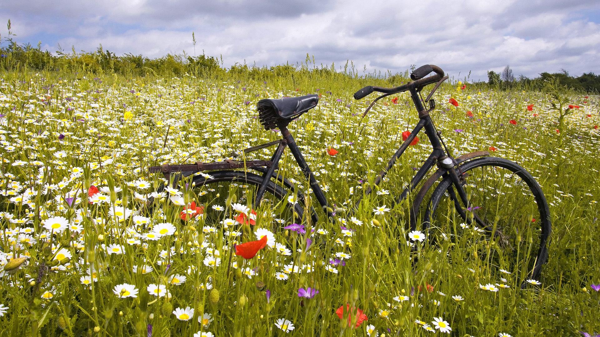 Citaten Over Fietsen : Quotes over de lente waar je spontaan van gaat fietsen