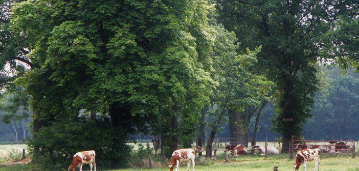 Tour de Boer: boeren-belevingsfietstocht in Twente
