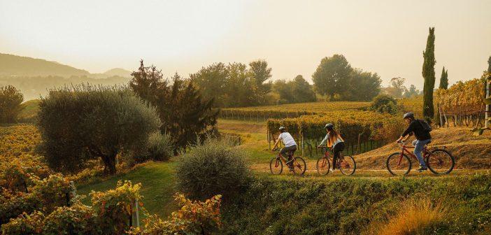 Bike + Wine: nieuwe wijnfietstocht in Ticino