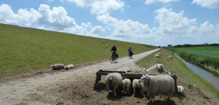 Voorjaarstip: rijd eens de Lammetjesfietsroute op Texel