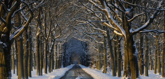 Fijne winterse adresjes op de Veluwe – met winactie!